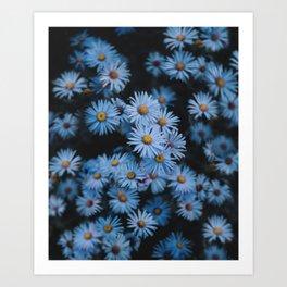 Blue Asters Art Print