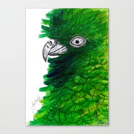New Zealand Cheeky Kea Canvas Print