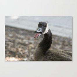 Squawking Canadian Goose Canvas Print