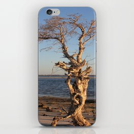 PeelTree iPhone Skin