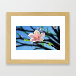 Peach Blossom Framed Art Print