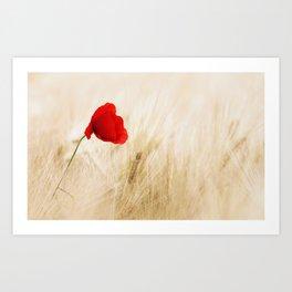 Single Red Poppy Blowing in a Field Art Print