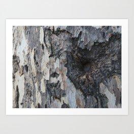 Tree Bark art work  Art Print