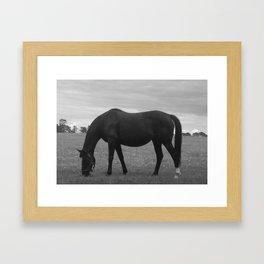 Irish Horse Framed Art Print