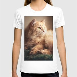 Portrait of Mr. Cesare in the sunset light. T-shirt