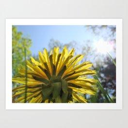 Summer Flower and Blue Sky Art Print