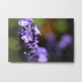 Lavender purple flower plant Metal Print