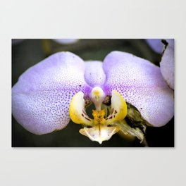 Macrophotography: Pink Orchid Canvas Print