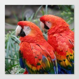 Scarlet Macaws Canvas Print