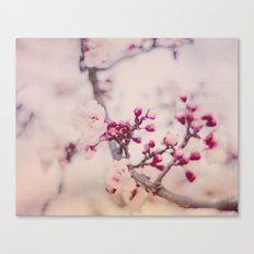 Spring Poetry Canvas Print