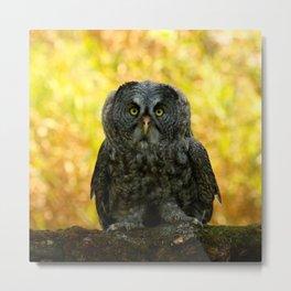 Owl Staring Contest Metal Print