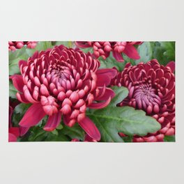 Red chrysanthemum Rug