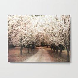 Dreamy Ethereal South Carolina Dogwood Trees Nature Landscape Metal Print