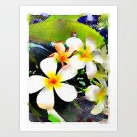 Frangipani / Plumeria Art Print