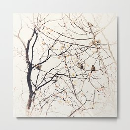 House Sparrows in Tree Branches Stylized Minimalist Nature Metal Print