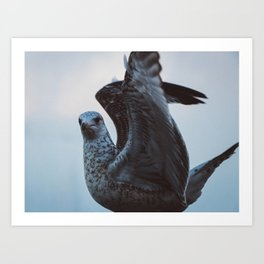 Seagull #3 Art Print
