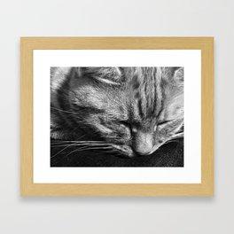 Bridget Rests Framed Art Print
