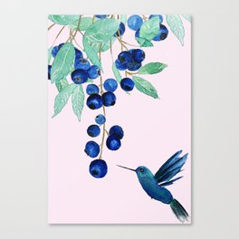 blueberry and humming bird Canvas Print