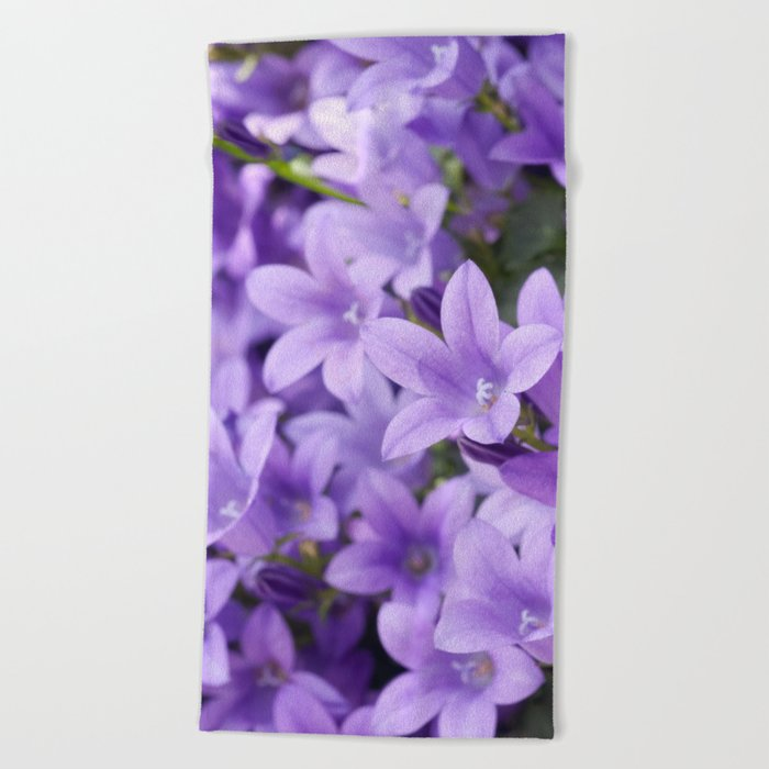 DREAMY - Purple flowers - Bellflower in the sun #1 Beach Towel