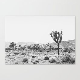 Joshua Tree Monochrome, No. 1 Canvas Print
