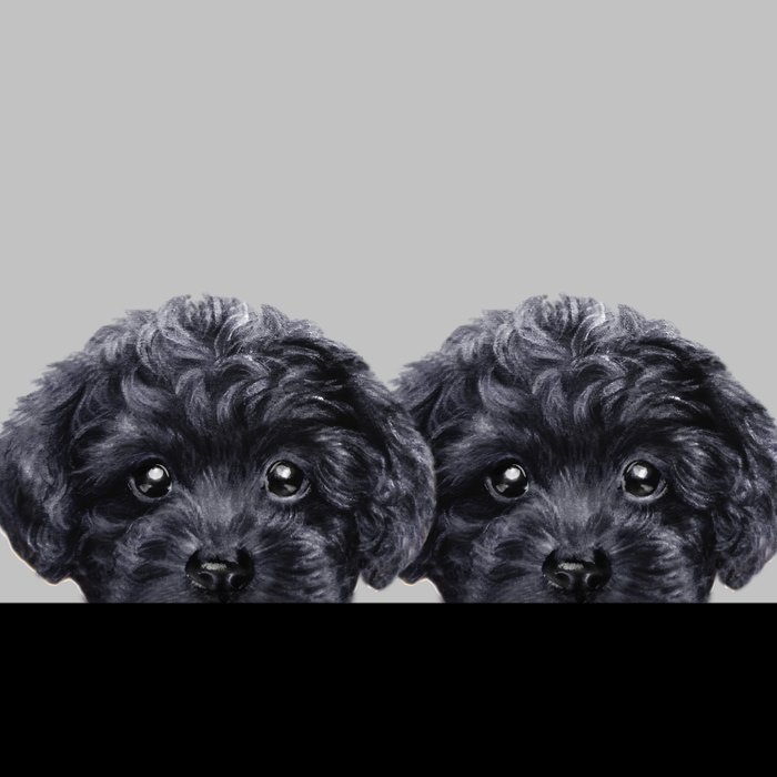 Black toy poodle Dog illustration original painting print Leggings