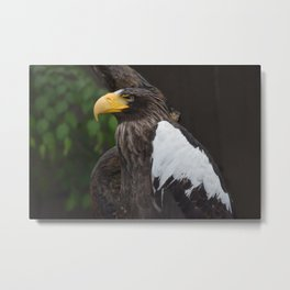 National Aviary - Pittsburgh - Stellers Sea Eagle 2 Metal Print
