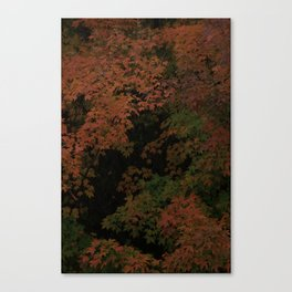 Sugar Maple 2012 Canvas Print