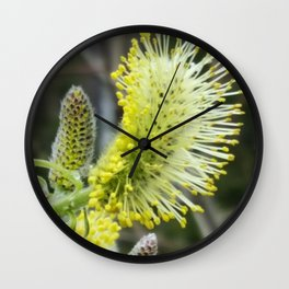 Pussy Willow - Wall Clock