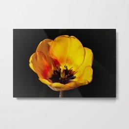 Stunning Argo Tulip Metal Print