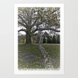 Providence Postcard Project: Tree, Roger Williams Park, South Elmwood Art Print