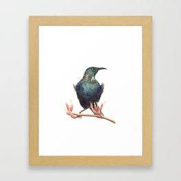 Tui - a native New Zealand bird 2013 Framed Art Print