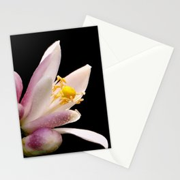 Lemon Buds Stationery Cards