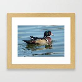 Wood Duck Framed Art Print