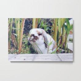 Bunny smiling in the garden Metal Print
