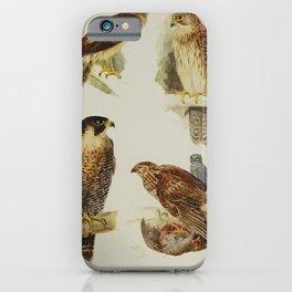 Montagu's Harrier, Peregrine Falcon, Kestrel, Hen Harrier22 iPhone Case