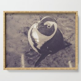 Adorable African Penguin Series 3 of 4 Serving Tray
