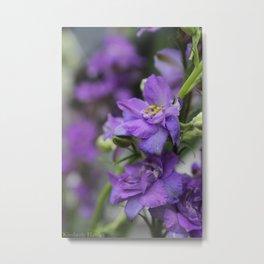 Purple Larkspur Metal Print