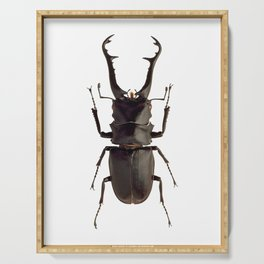 Stag Beetle Serving Tray