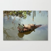 turtles Canvas Prints featuring Turtles by Black Rose Photography