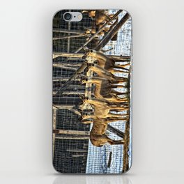 Whitetail Deer Stare Down iPhone Skin