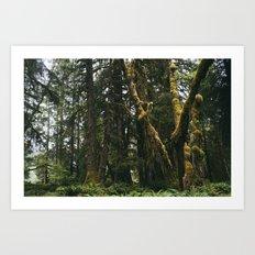 Rainforest Moss Art Print