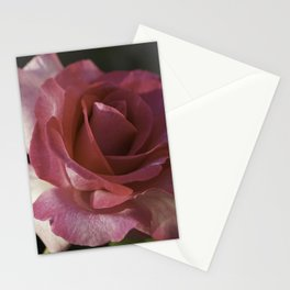 Late October Rose Stationery Cards