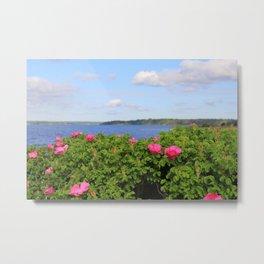 Melmerby Beach Wild Rose Metal Print