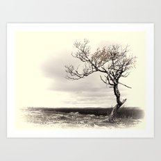 Lonely Tree #5 Art Print