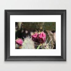 Red Flower Cactus  Framed Art Print
