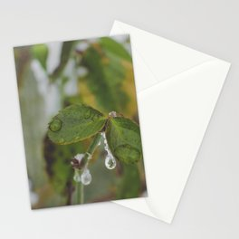 Frost on the leaves Stationery Cards