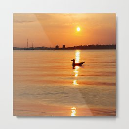 Seabird in the evening light Metal Print