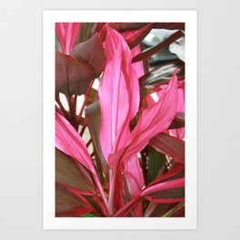 Ti Plant DPG150426g Art Print