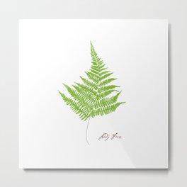 Lady Fern Illustration Botanical Print Metal Print