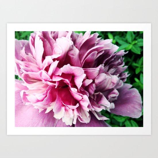 Big pink peony Art Print